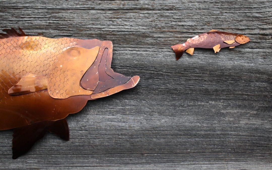 Wildlife in Copper